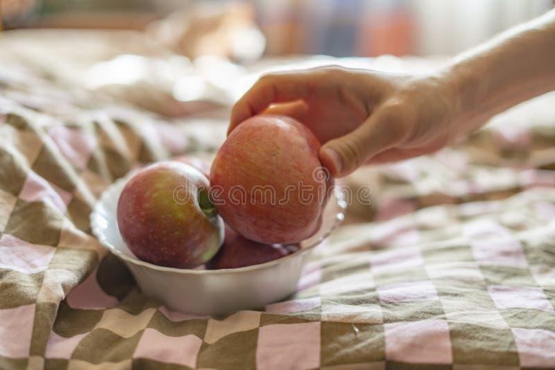 Ciérrese encima de las manos que sostienen una placa con las manzanas crudas frescas de la fruta en cama por la mañana f foto de archivo