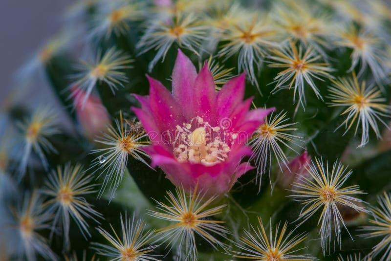 Ciérrese encima de las plantas del cactus en jardín imagenes de archivo