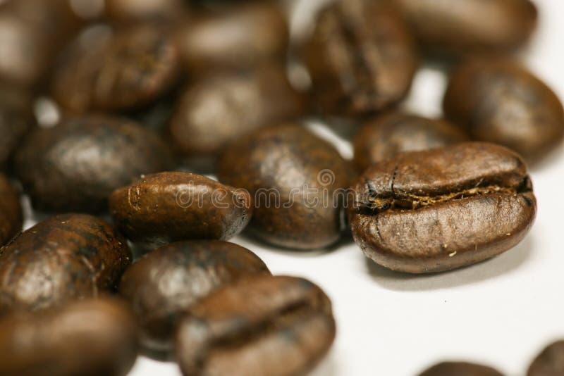 Ciérrese encima de los granos de café frescos y aislado en el fondo blanco, el material fresco del mercado, la bebida sana y la b fotos de archivo libres de regalías