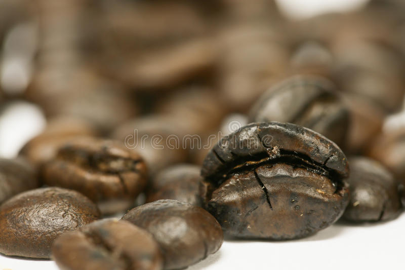 Ciérrese encima de los granos de café frescos y aislado en el fondo blanco, el material fresco del mercado, la bebida sana y la b imagen de archivo