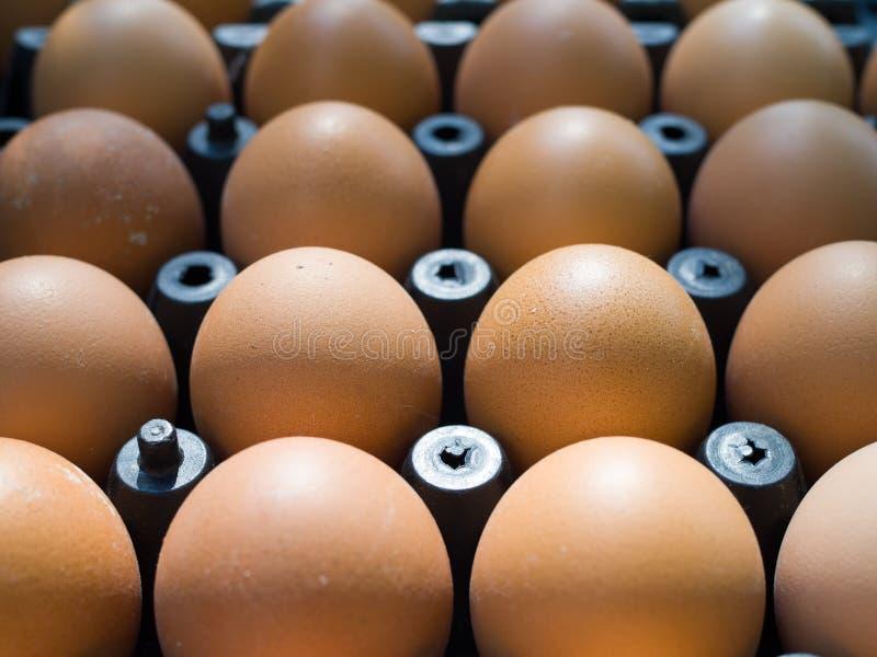Ciérrese encima de los huevos frescos del pollo en la bandeja imagen de archivo libre de regalías