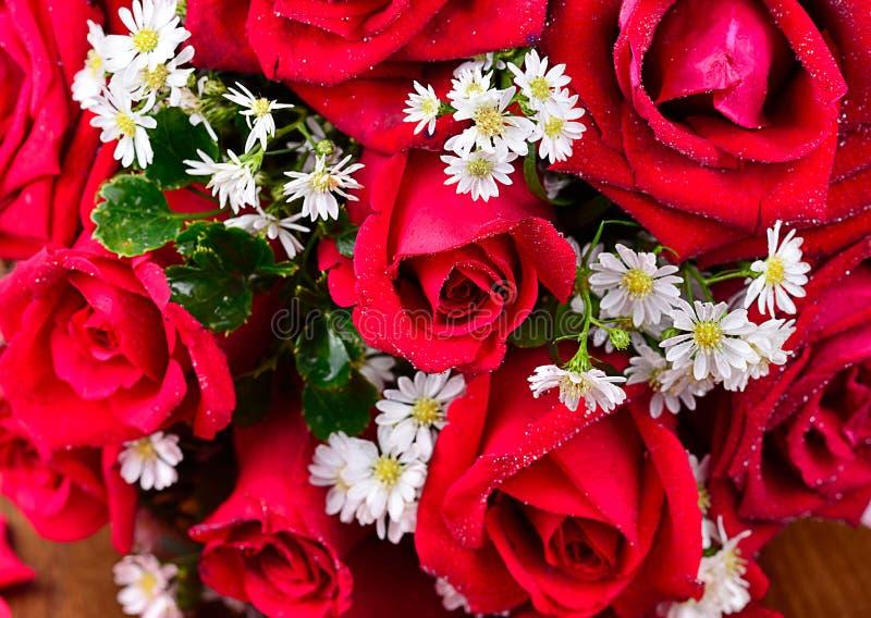 Ciérrese encima de macro de una rosa roja imágenes de archivo libres de regalías