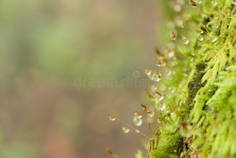 Ciérrese encima de musgo verde y el descenso del agua, copia el espacio imágenes de archivo libres de regalías