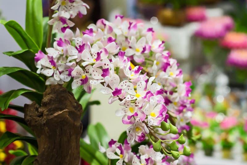 Ciérrese encima de orquídeas imagen de archivo libre de regalías