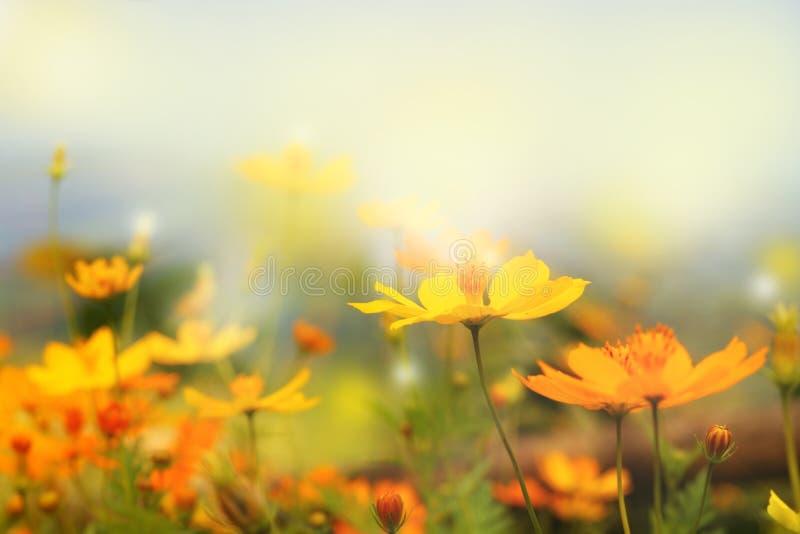 ciérrese encima de paisaje de la falta de definición de la flor amarilla hermosa y del cielo azul fotografía de archivo libre de regalías