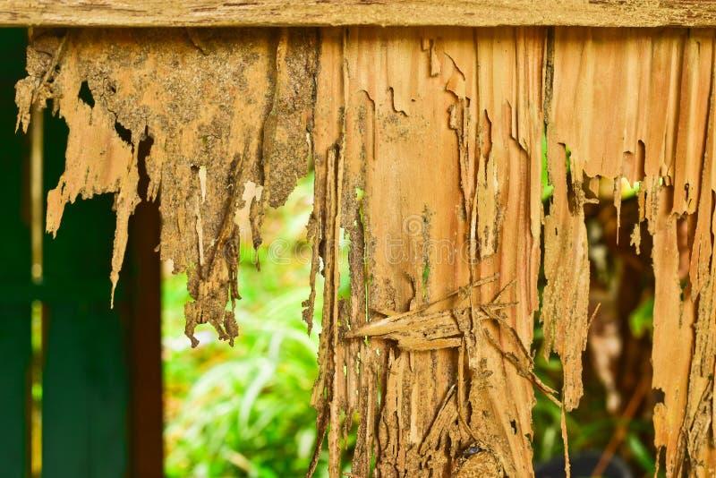 Ciérrese encima de parte de un decaimiento de madera fotos de archivo