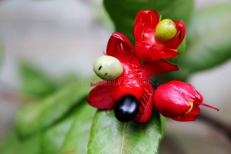 Ciérrese encima de pequeña baya hermosa y de las pequeñas flores en fondo de la hoja del verde de la falta de definición en parqu imagenes de archivo