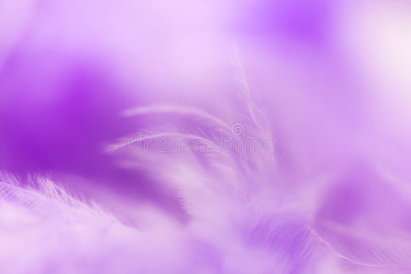 Ciérrese encima de pluma púrpura Uso de la imagen para la textura del fondo, abstracto fotos de archivo