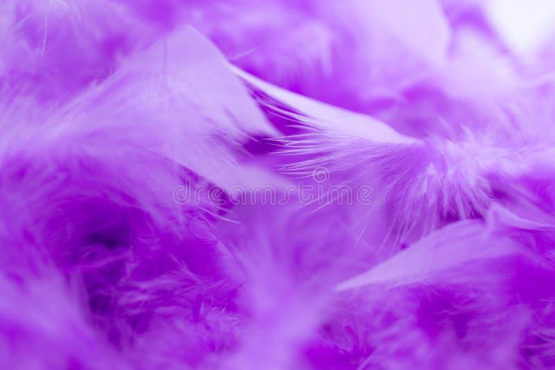 Ciérrese encima de pluma púrpura Uso de la imagen para la textura del fondo, abstracto imagenes de archivo