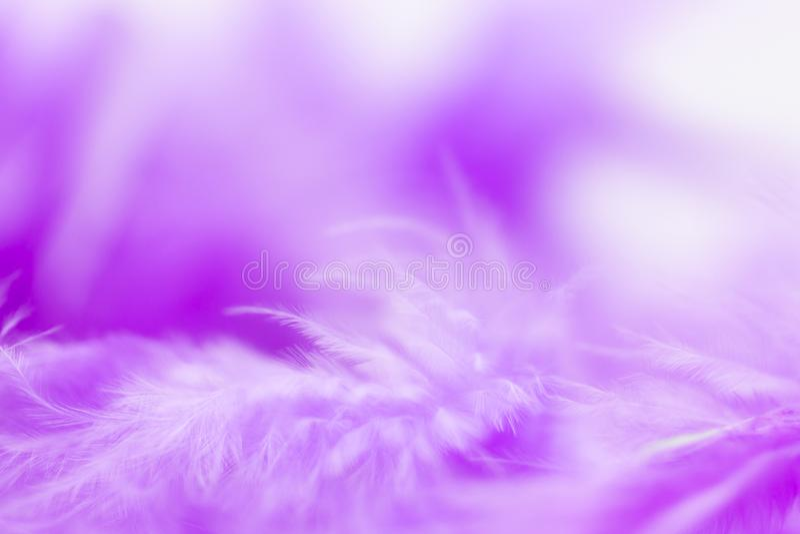 Ciérrese encima de pluma púrpura Uso de la imagen para la textura del fondo, extracto, ala del animal fotografía de archivo libre de regalías