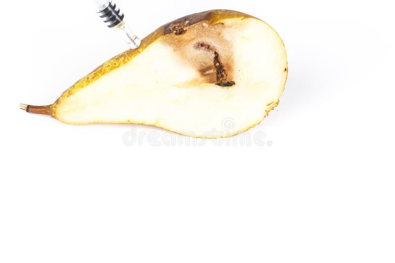 Ciérrese encima de rastro del taladro de una polilla de bacalaos pequeños Cydia Pomonella, en una media pera agusanada media En e imagen de archivo