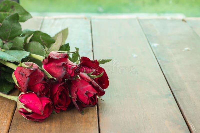Ciérrese encima de rosas rojas naturales y de descensos del agua en de madera usando como fondo del día de tarjetas del día de Sa fotos de archivo libres de regalías
