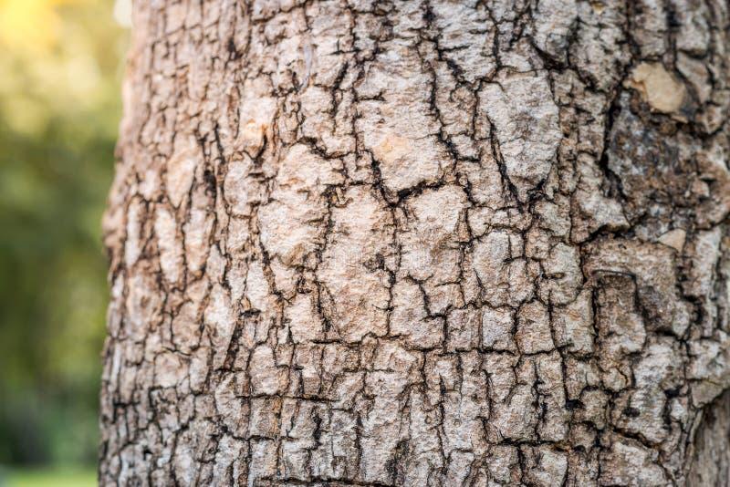 Ciérrese encima de textura del árbol fotografía de archivo libre de regalías