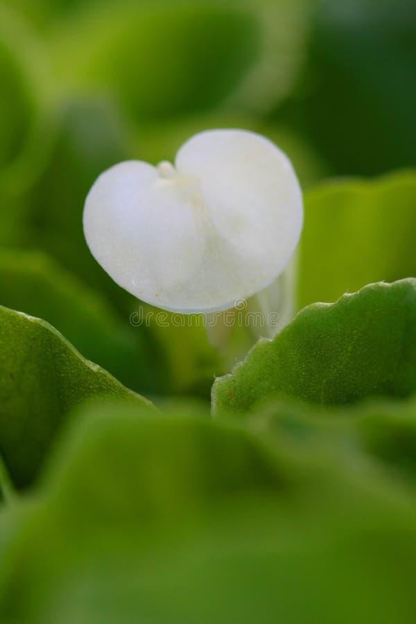 Ciérrese encima de tiro de la flor blanca imagen de archivo libre de regalías
