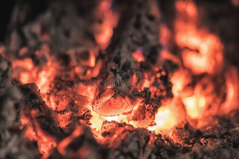 Ciérrese encima de tiro de la leña ardiente en la chimenea fotos de archivo