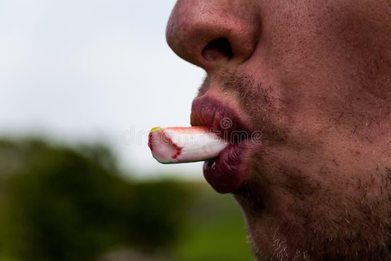 Ciérrese encima de vista de la boca del hombre joven s que come la cebolleta fresca o de cana Concepto de la foto de la comida Va foto de archivo libre de regalías