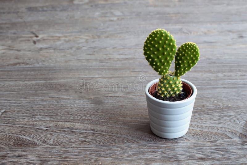 Ciérrese encima de vista de la pequeña planta aislada del cactus imágenes de archivo libres de regalías