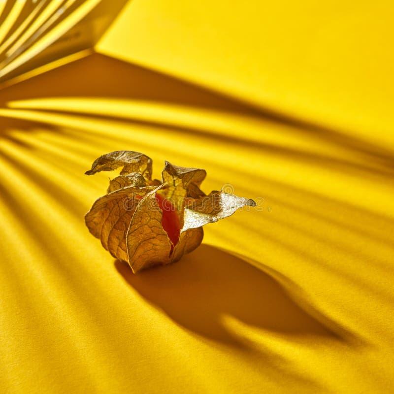 Ciérrese encima de vista de la sola fruta amarilla del physalis maduro, jugoso con las sombras rayadas en un fondo amarillo, foco foto de archivo libre de regalías