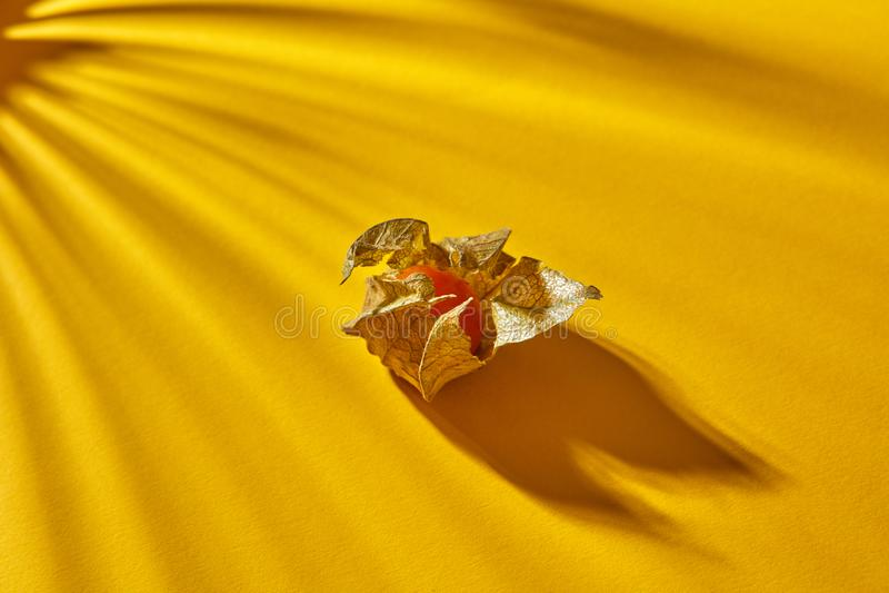 Ciérrese encima de vista de la sola fruta amarilla del physalis maduro, jugoso con las sombras rayadas en un fondo amarillo, foco imagen de archivo