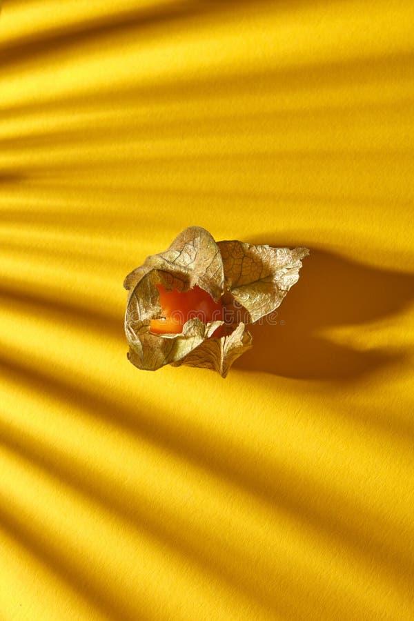 Ciérrese encima de vista de la sola fruta amarilla del physalis maduro, jugoso con las sombras rayadas en un fondo amarillo, foco fotos de archivo libres de regalías