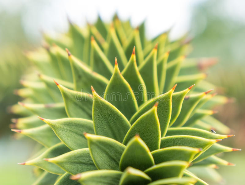 Ciérrese encima del agavo verde fotografía de archivo