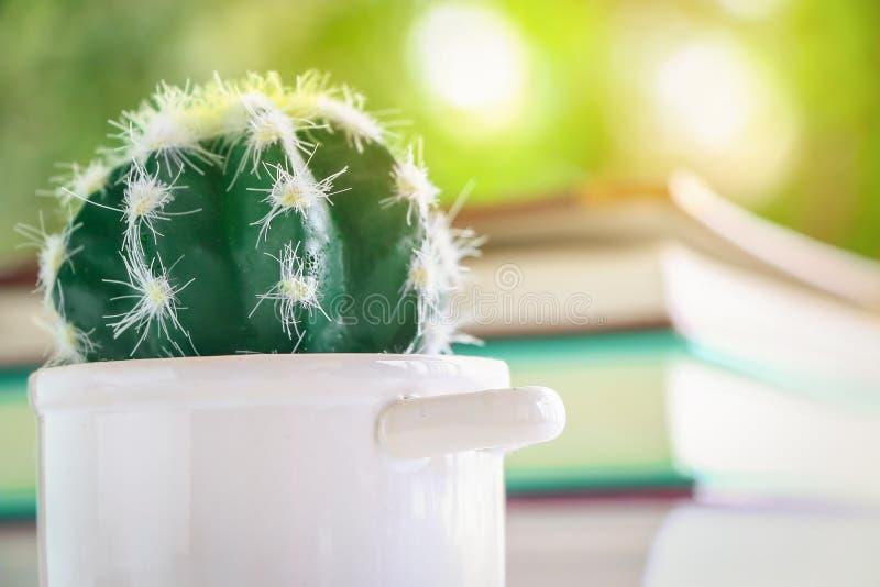 Ciérrese encima del cactus en pote con empañado de muchos reservan para leído y luz del sol foto de archivo libre de regalías