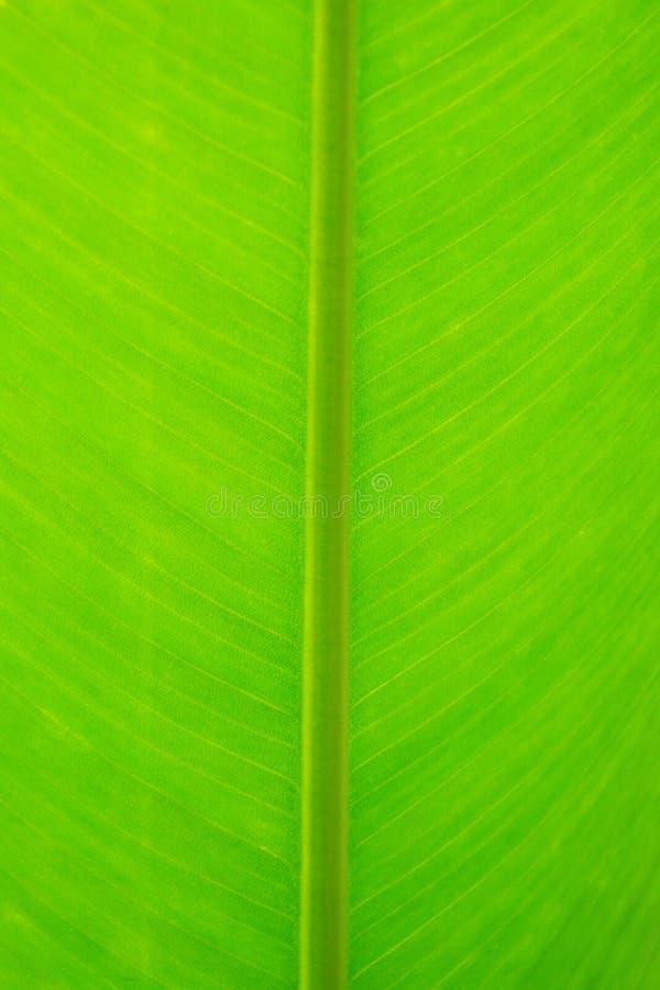 Download Ciérrese Encima Del Detalle Del Fondo Verde De La Textura De La Hoja Imagen de archivo - Imagen de elemento, macro: 41902179