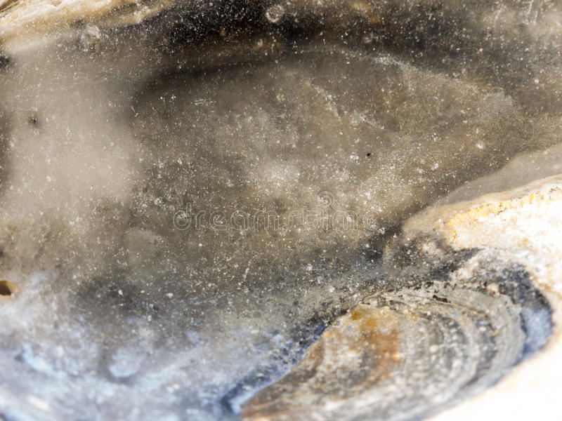 Ciérrese encima del detalle del superficie inferior de la concha marina imágenes de archivo libres de regalías