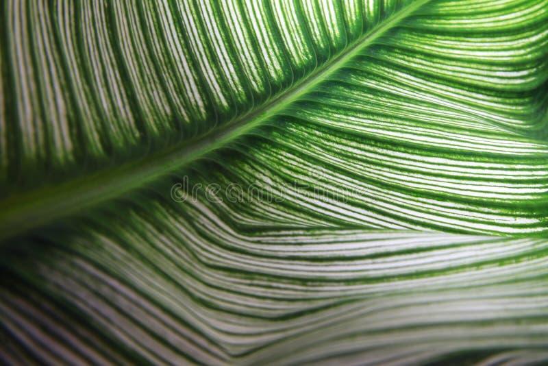 Ciérrese encima del detalle verde de la textura de la hoja fotos de archivo