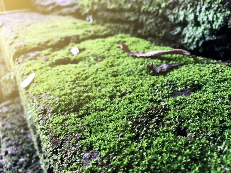 Ciérrese encima del MOS verde en piedra imagenes de archivo