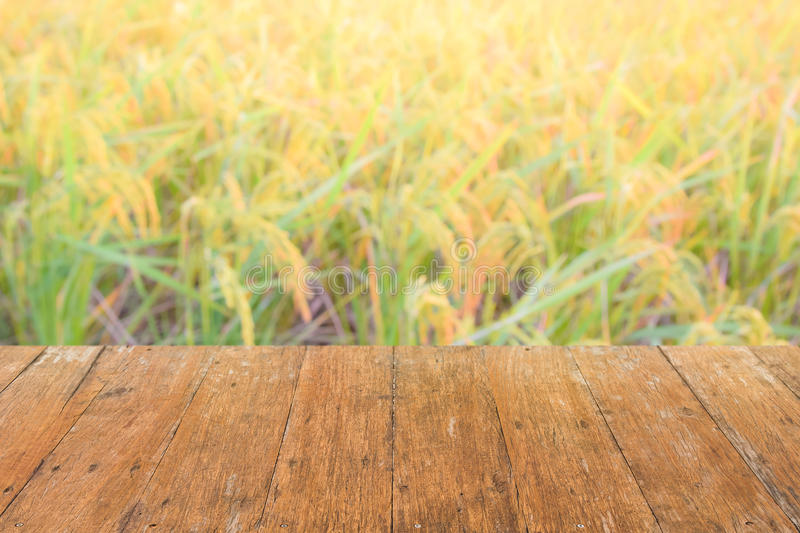 Ciérrese encima del panel superior de madera con el fondo borroso del campo del arroz imagenes de archivo