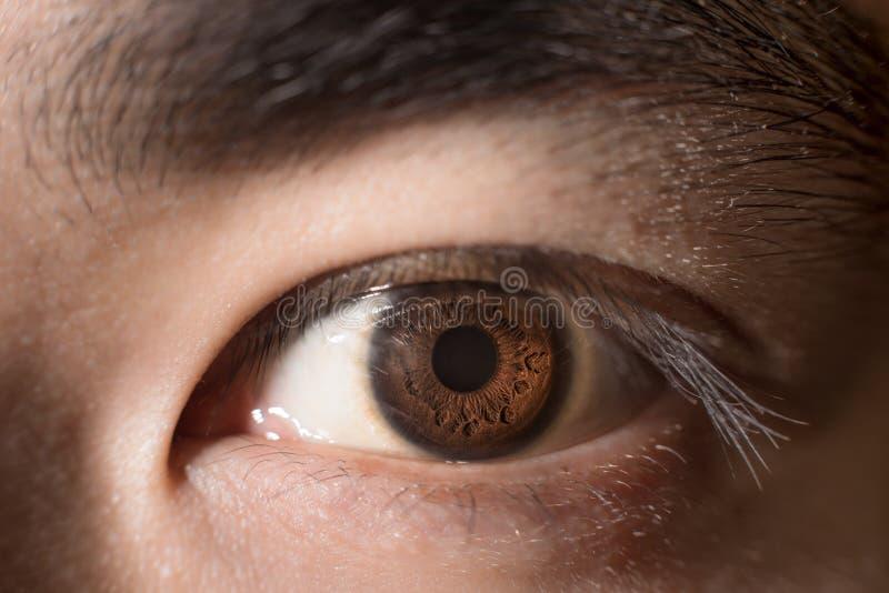 Ciérrese hasta ojo marrón fotos de archivo