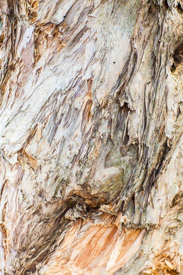 Ciérrese para arriba de árbol fotos de archivo libres de regalías