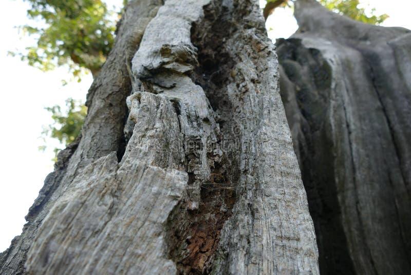 Ciérrese para arriba de árbol de hueco imagenes de archivo