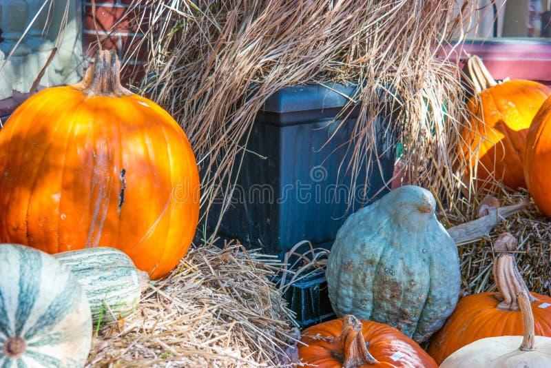 Ciérrese para arriba de Autumn Pumpkin Display imagen de archivo libre de regalías