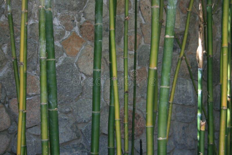 Ciérrese para arriba de bambú verde imagen de archivo