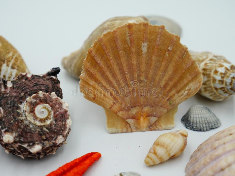 Ciérrese para arriba de cáscaras aisladas del océano imagenes de archivo