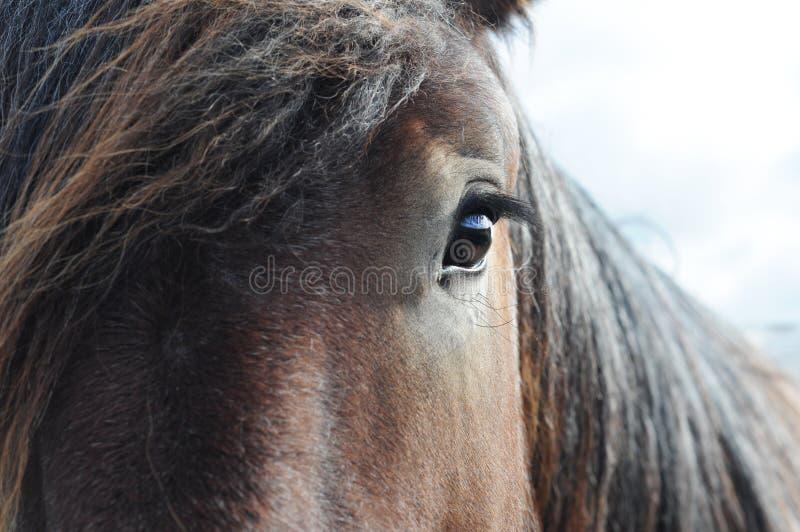 Ciérrese para arriba de caballo de bosquejo de Brabante foto de archivo