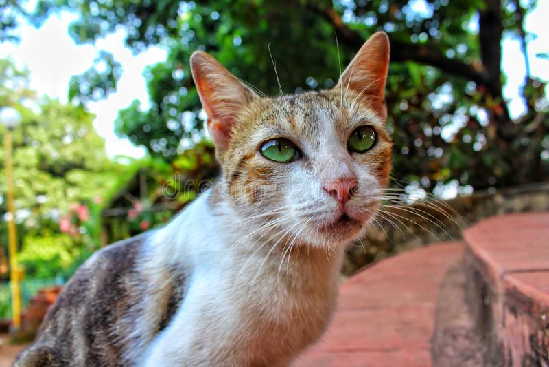 Ciérrese para arriba de cara del gato pequeño y lindo imagenes de archivo