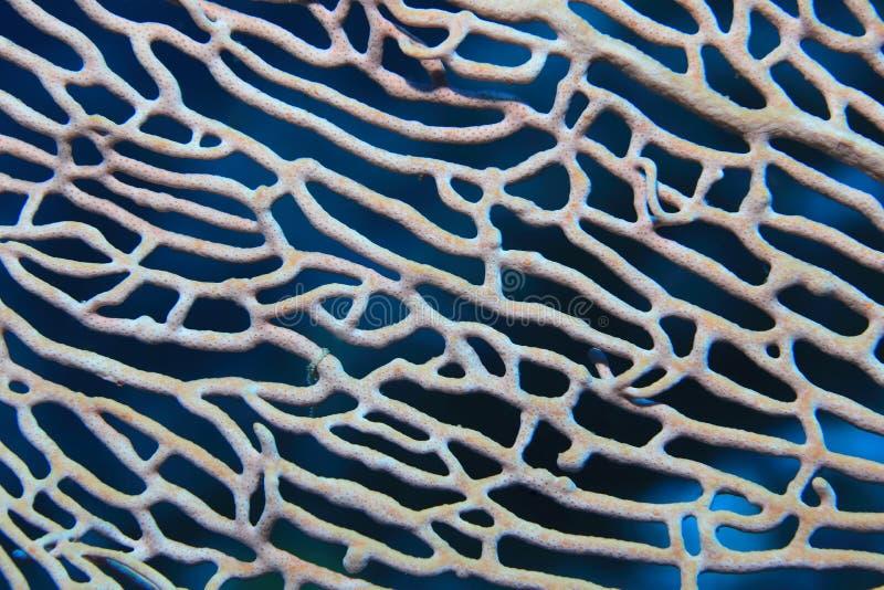 Ciérrese para arriba de coral de la fan foto de archivo
