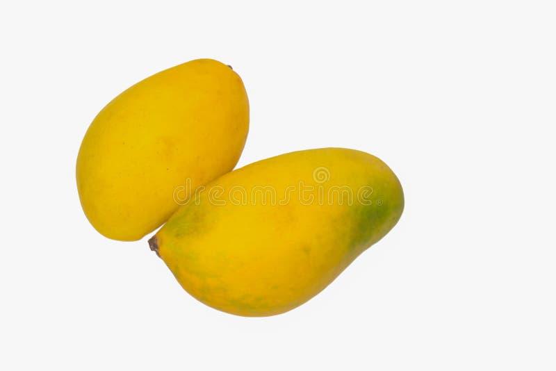 Ciérrese para arriba de dos mangos maduros frescos aislados en el fondo blanco fotos de archivo