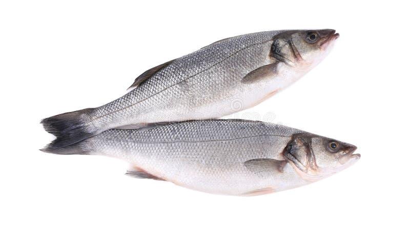 Ciérrese para arriba de dos pescados frescos de la lubina foto de archivo