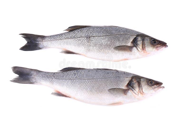 Ciérrese para arriba de dos pescados frescos de la lubina imagen de archivo
