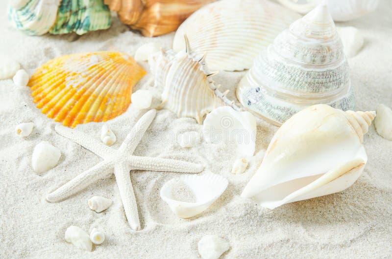 Ciérrese para arriba de estrellas de mar y de conchas marinas en el fondo blanco de la arena fotos de archivo