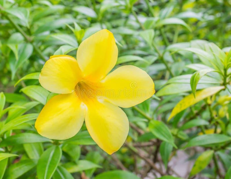 Ciérrese para arriba de flores amarillas hermosas foto de archivo