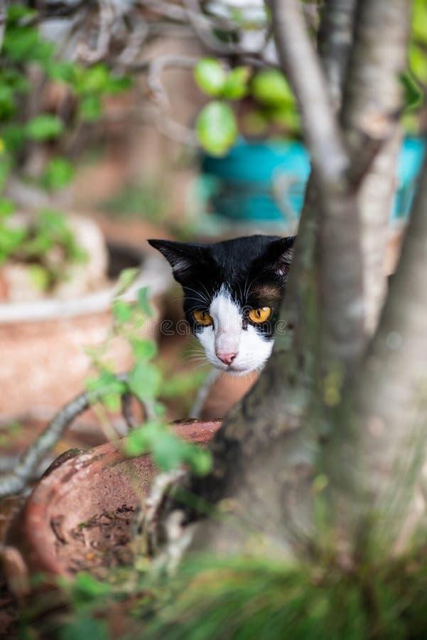 Ciérrese para arriba de gato blanco y negro fotografía de archivo libre de regalías