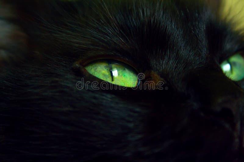 Ciérrese para arriba de gato del ojo imagenes de archivo