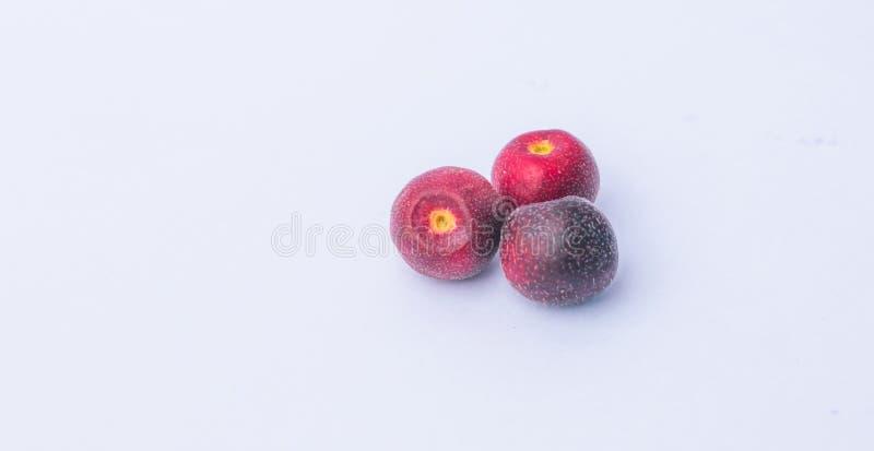Ciérrese para arriba de grewia fresco asiatica o de la fruta del phalsa imágenes de archivo libres de regalías