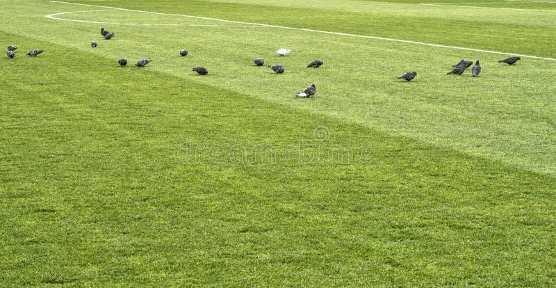 Ciérrese para arriba de hierba del campo de fútbol imágenes de archivo libres de regalías
