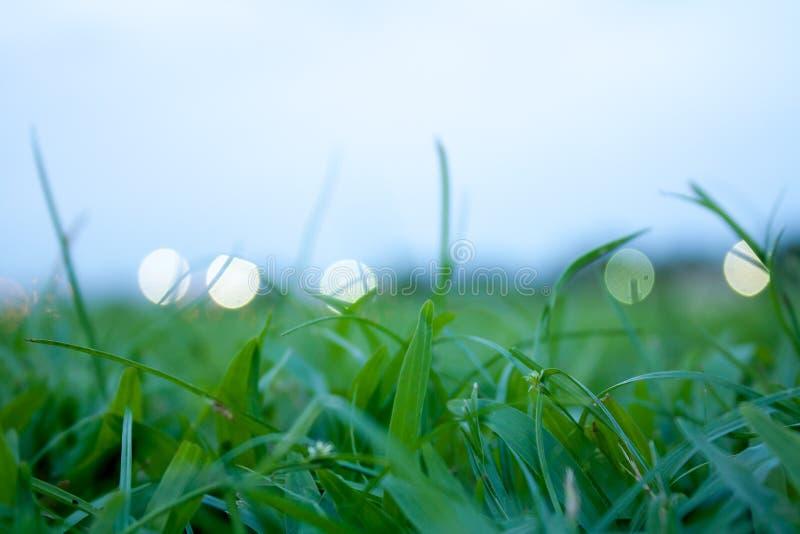 Ciérrese para arriba de hierba verde en el campo foto de archivo